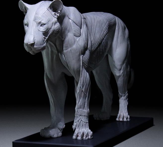 猫科动物解剖模型