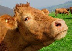 澳大利亚研究3D打印红肉产品为行业增值