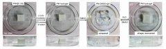 科学家3D打印出超强4D智能材料,可举起比自身重14倍的物体