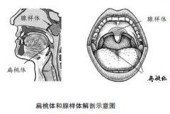 3D打印技术在口颌面治疗中的应用进展
