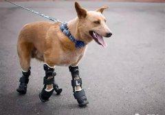 3D打印技术不仅能帮助人类也能拯救狗狗的一生