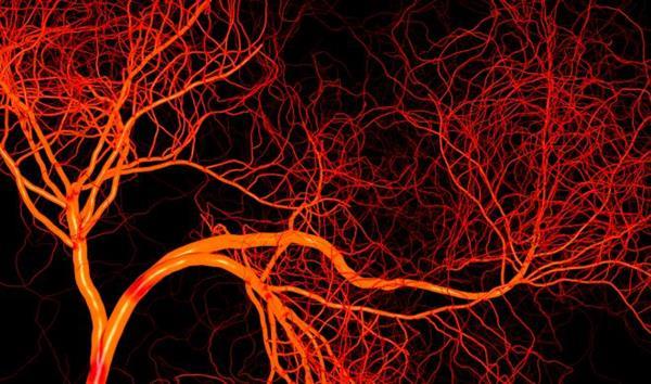 生物3D打印血管化肝组织可更精确的进行药物毒性测试