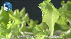 中国空间实验室利用3D打印成功地在微重力环境下种植生菜