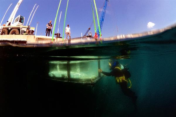 ca88会员登录|ca88亚洲城官网会员登录,欢迎光临_六个ca88会员登录珊瑚礁沉入摩纳哥海底,有望恢复生物多样性