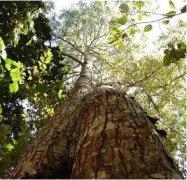 ca88会员登录,ca88亚洲城官网会员登录,ca88亚洲城,ca88亚洲城官网_<b>新发现:树皮提取单宁可用于生产ca88会员登录复合材料</b>