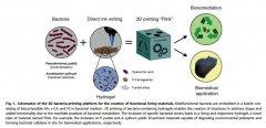 看如何3D打印细菌以制造功能性复杂材料?