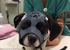 3D打印头罩将帮助受伤狗狗康复