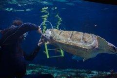 ca88会员登录,ca88亚洲城官网会员登录,ca88亚洲城,ca88亚洲城官网_科学家ca88会员登录外壳支架,帮助受伤的红海龟
