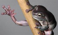 3D打印的青蛙脚:改善软组织的抓握不足问题