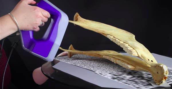 斯坦福大学借助3D扫描技术把动物骨骼制作成模型供人们研究