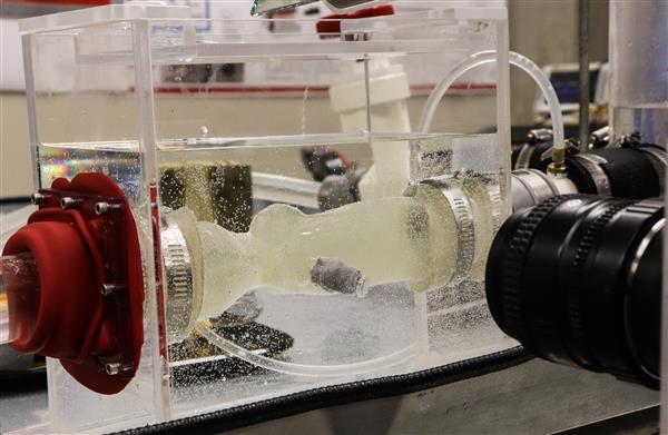 用人造血液在心脏模拟器中进行3D打印的主动脉