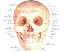 我国颅颌面骨缺损个性化修复广泛受益3D打印技术