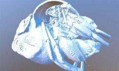 <b>3D扫描和3D打印正在帮助科学家鉴别新的寄居蟹种类</b>