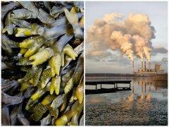 ca88会员登录|ca88亚洲城官网会员登录,欢迎光临_意大利研究人员开发了一种可吸附污染物的ca88会员登录材料