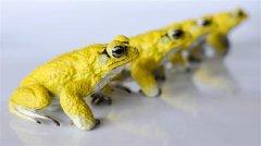 <b>加拿大生物学家3D打印机器蟾蜍来研究蟾蜍的变色原因</b>