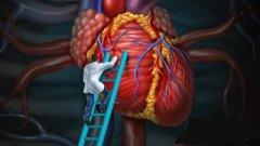 波士顿的人体器官3D打印工厂旨在将CT、MRI转变为器官模型