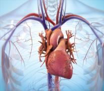 BIOLIFE4D公司宣布成功生物3D打印人类心脏组织