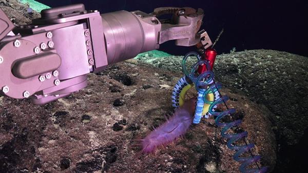 3D打印软机器人操纵器使科学家们能够研究微妙的深海生物