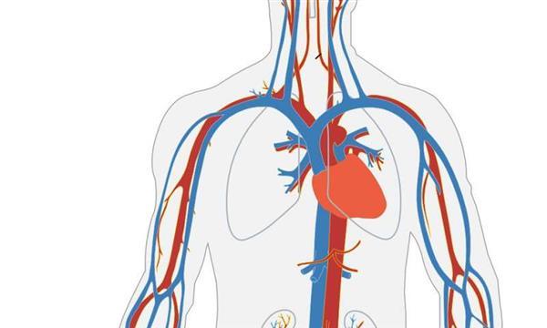 研究人员生物3D打印模拟血管和导管的管状结构