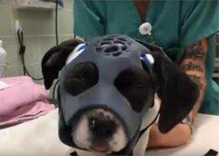 <b>3D打印修复小狗骨折 另外还在这七个领域可堪重用!</b>