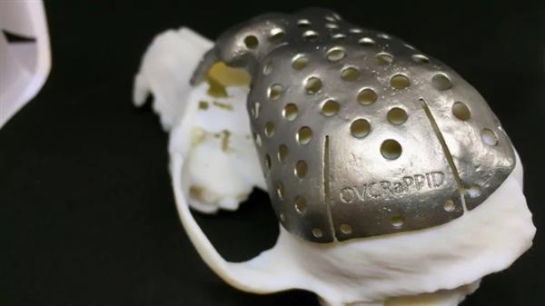 安大略省研究人员3D打印钛颅骨治愈患癌症的狗