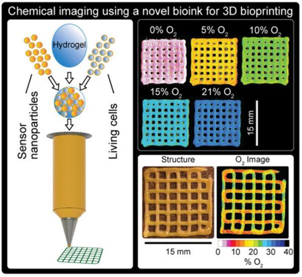 哥本哈根大学开发新的生物3D打印方法监测复杂的组织结构