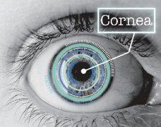 Precise Bio推出眼科业务部门,开发3D打印眼角膜