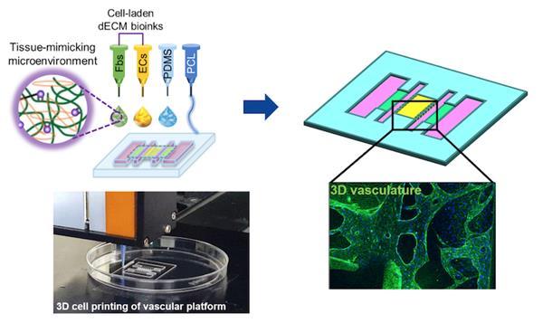 韩国研究人员3D打印功能性气管芯片