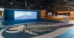 3D打印长5米角岛鲸骨架,使用TPU材料仅耗时12天