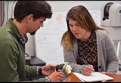 VA Puget Sound医疗保健系统放射科医生Beth Ripley对患有癌性肿瘤的肾脏模型进行质量检查
