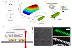 <b>生物3D打印可降解微型游动装置应用于诊断治疗药物的递送</b>