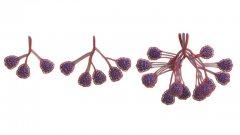 Nervous System与莱斯大学研究人员合作3D打印血管网络