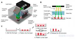 用于细胞3D打印的可见光交联水凝胶