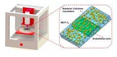 <b>哈佛医学院利用3D打印制造出低成本纸基血管化组织模型</b>