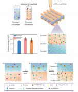 <b>西安交大与哈佛大学合作研发水凝胶/弹性体复合物3D打印技术</b>