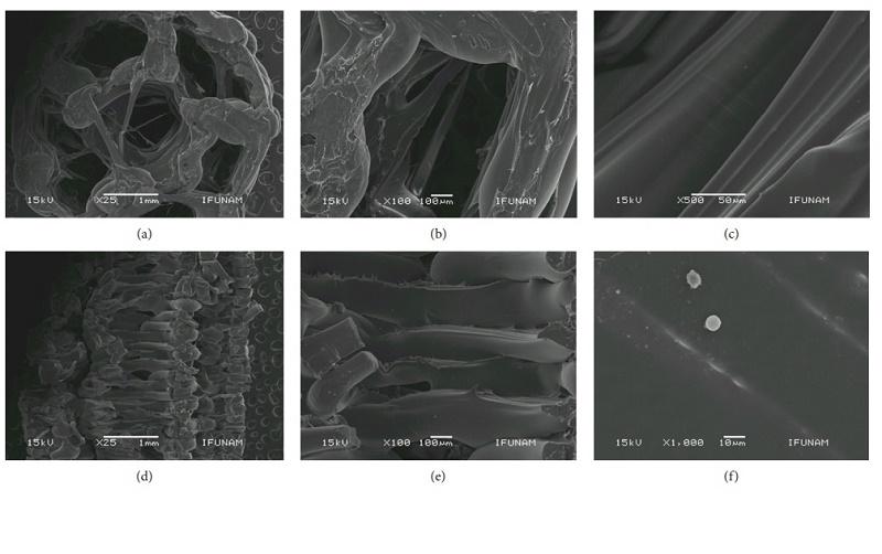 SEM显微照片显示3D打印的管状支架的形态