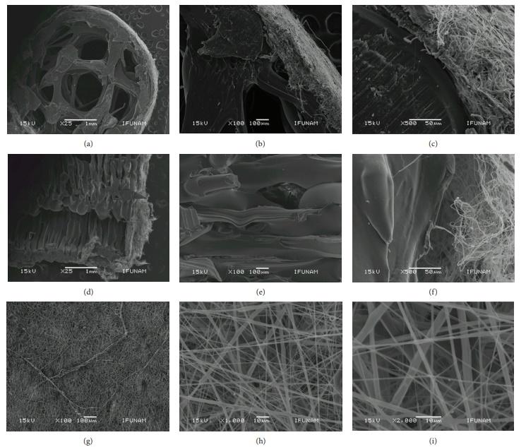 涂有7%PLA纳米纤维的3D打印管状支架的SEM显微照片