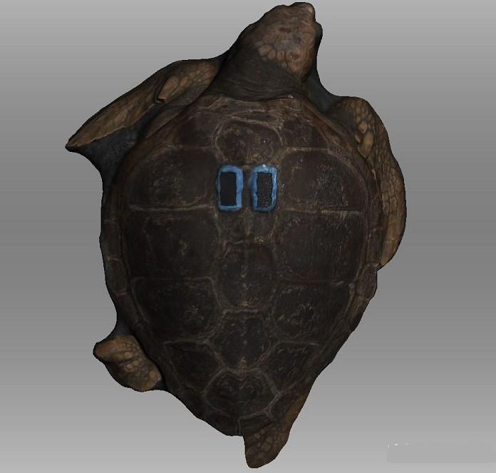 大学生利用3D扫描创建海豚、海龟、鲨鱼三维数据,研究海洋生命