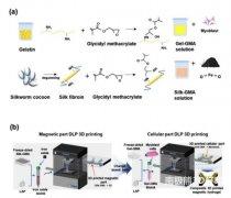 Biofabrication:利用投影式光固化3D打印方法制造磁力生物反应器